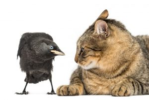 unconditional love enemies cat crow