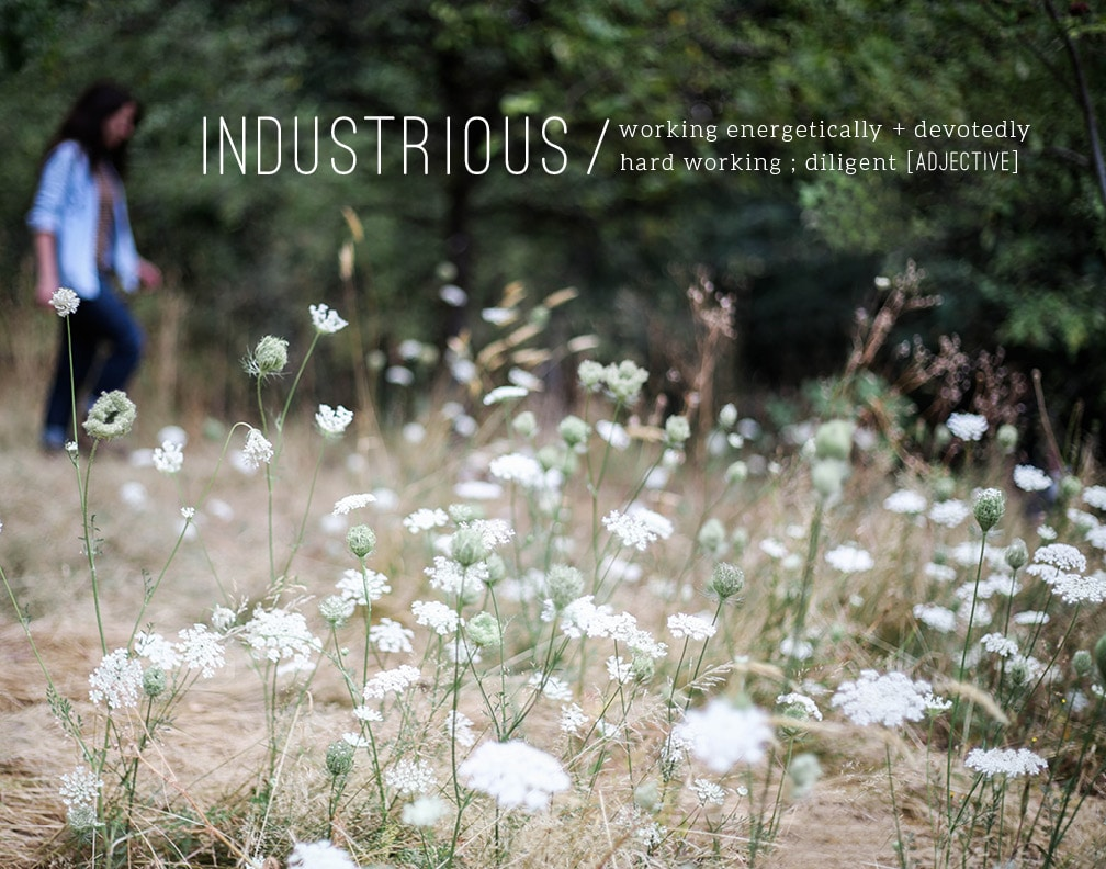 DARLING_industrious